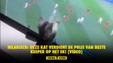 Hilarisch: Deze kat verdient de prijs van beste keeper op het EK! (VIDEO)
